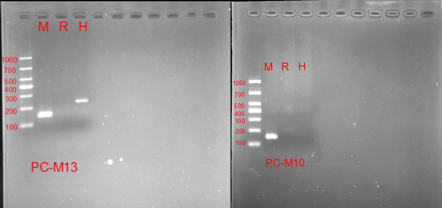 鉴定细胞来源种属